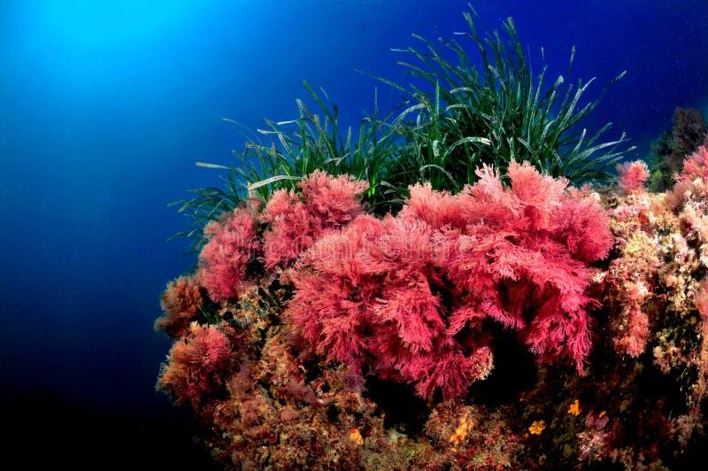 Colores del mar tirreno imagenes de archivo