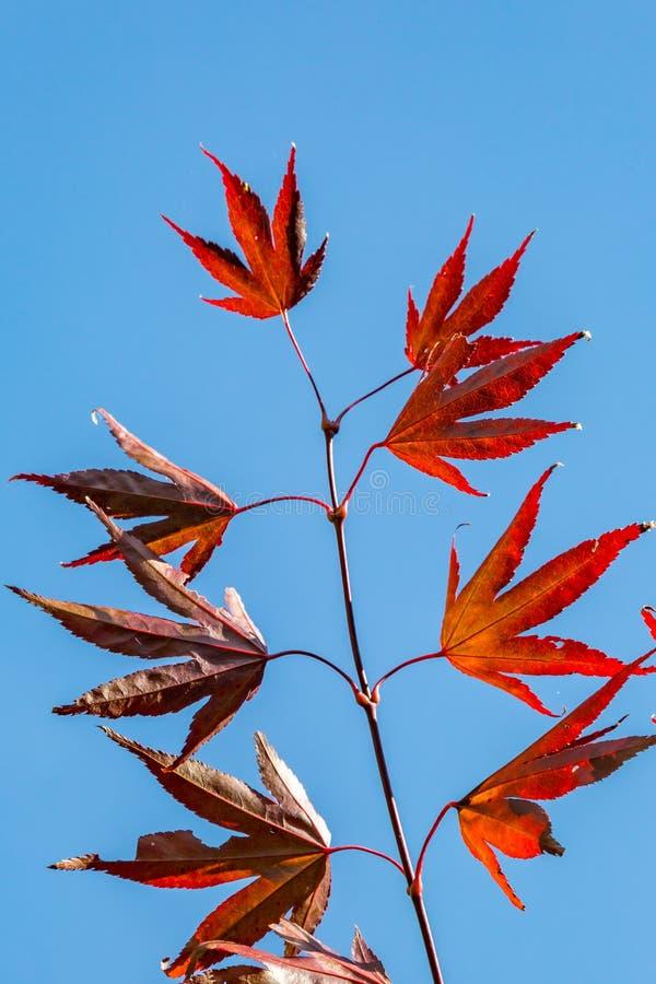 Colores 9 del otoño imágenes de archivo libres de regalías