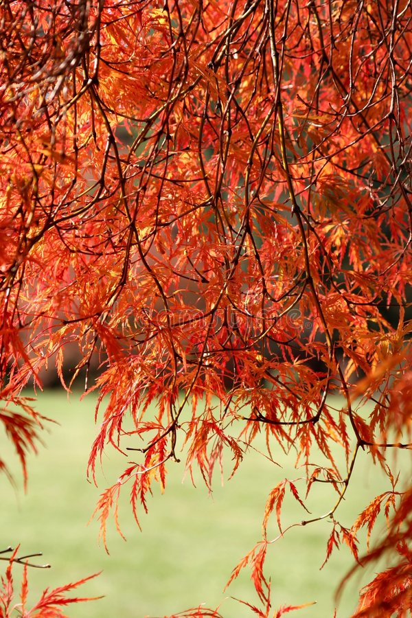 Colores del otoño imagen de archivo