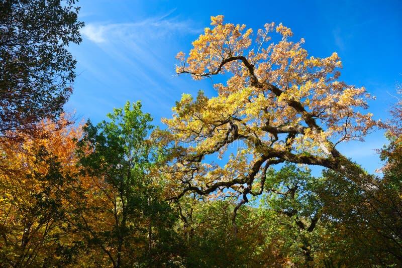 Colores del otoño fotos de archivo