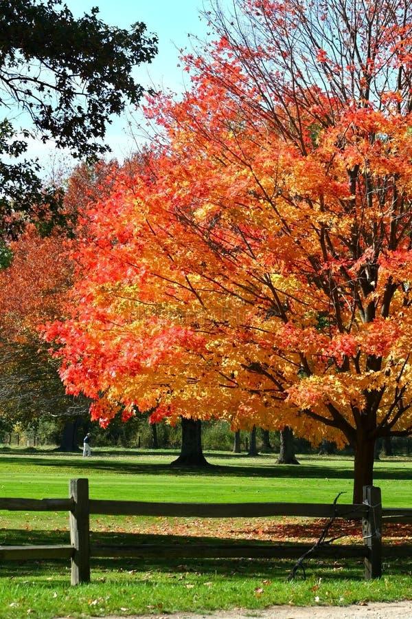 Autumn Colors imagenes de archivo