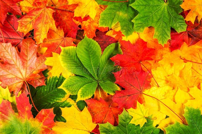 Colores 9 del otoño fotografía de archivo