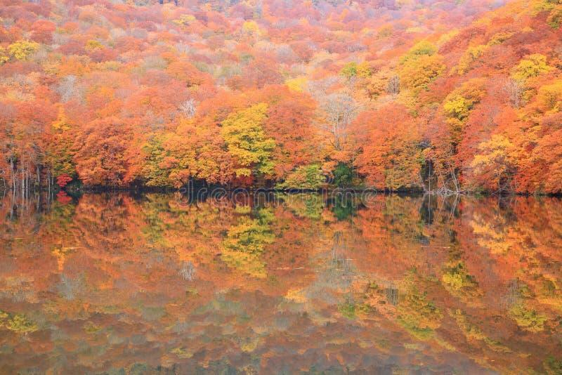 Colores del otoño de la charca imagen de archivo libre de regalías