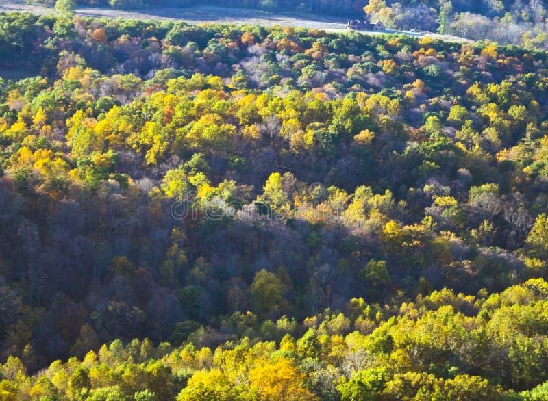 Colores del otoño de la naturaleza fotografía de archivo libre de regalías