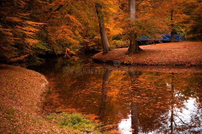 Colores del otoño en el bosque fotografía de archivo