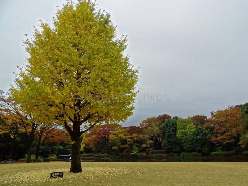 Colores del otoño en el parque de Kitanomaru, Tokio fotos de archivo