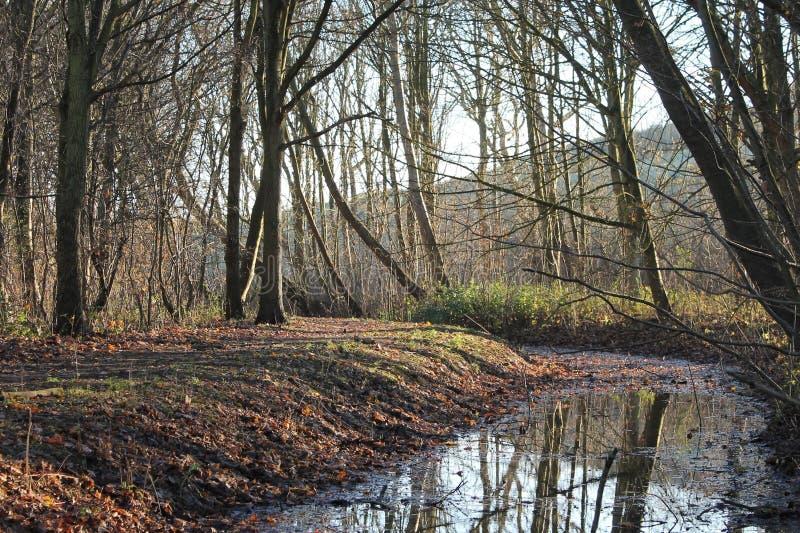 Colores del otoño en la más forrest durante invierno imagenes de archivo