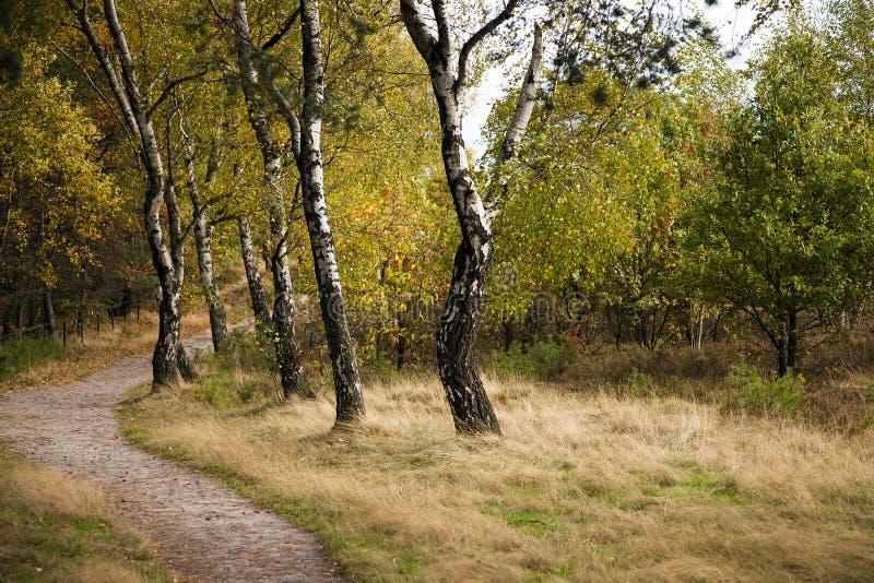 Colores del otoño en un bosque de hojas caducas fotografía de archivo