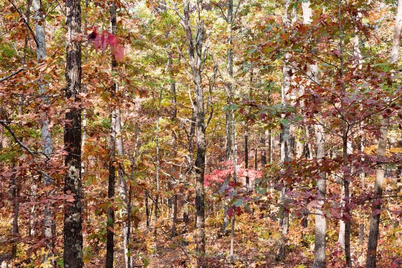 Colores del otoño o de la caída en bosque foto de archivo libre de regalías