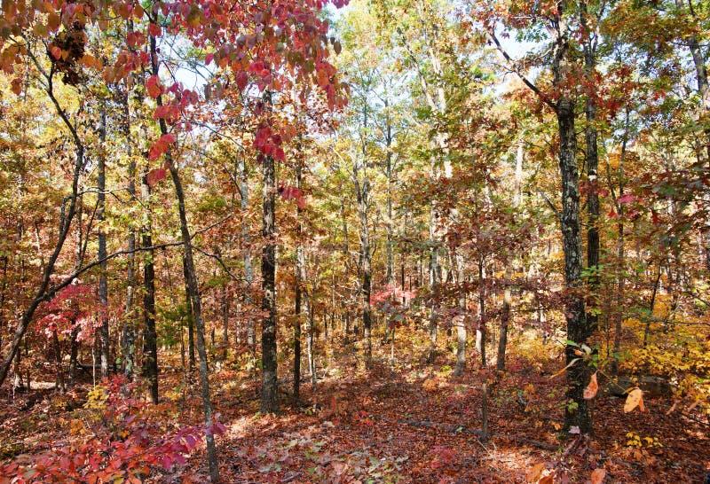 Colores del otoño o de la caída en bosque fotografía de archivo libre de regalías