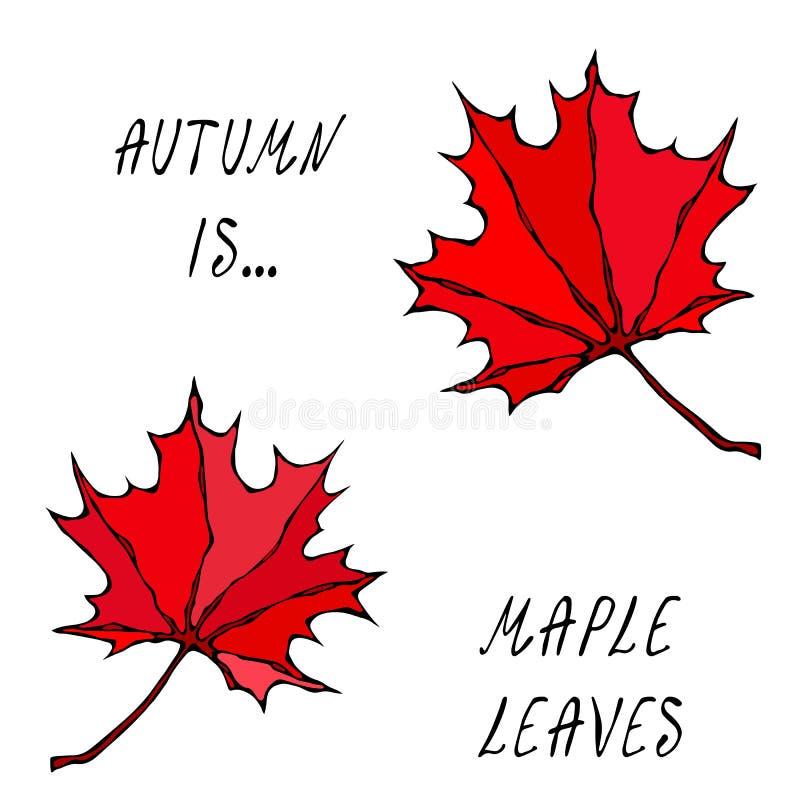 Colores 9 del otoño Símbolo canadiense del día Otoño o colección de la cosecha de la caída Ejemplo de alta calidad dibujado mano  libre illustration