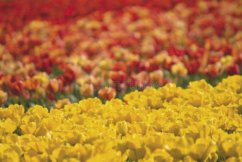 Colores del resorte fotos de archivo