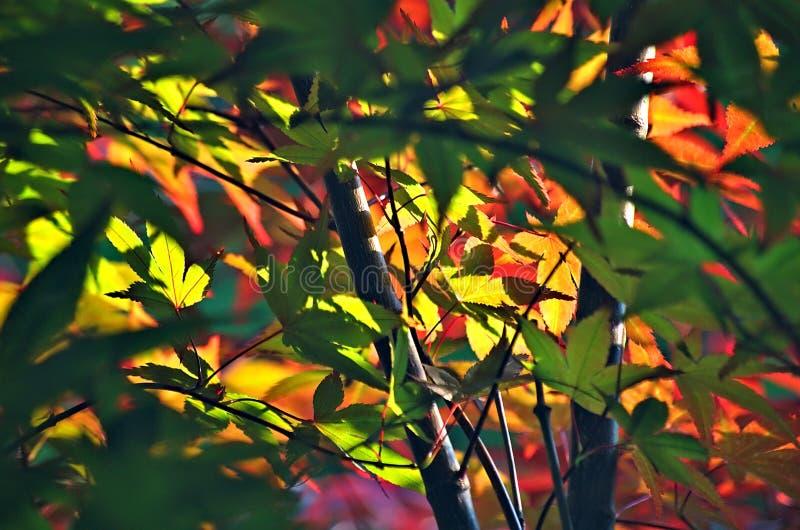 Colores Del Verano Dominio Público Y Gratuito Cc0 Imagen