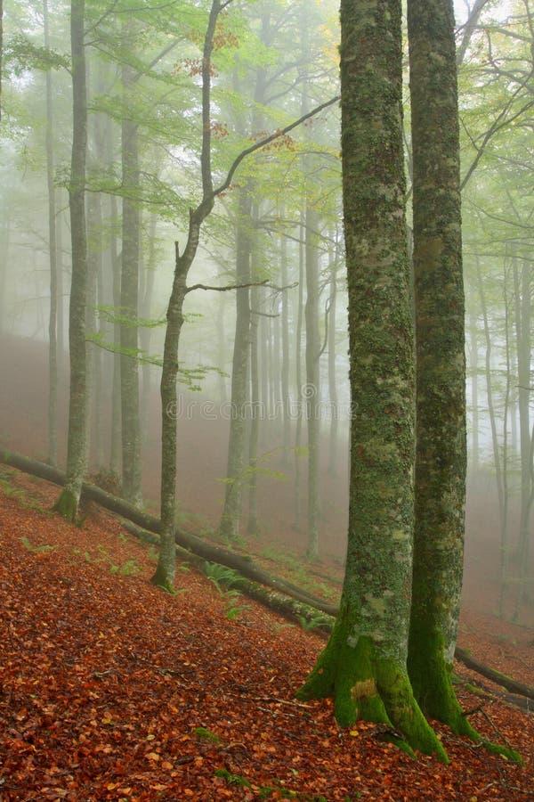 Colores en otoño foto de archivo