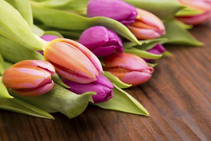 Colores-Frühlingstulpen stockfotos