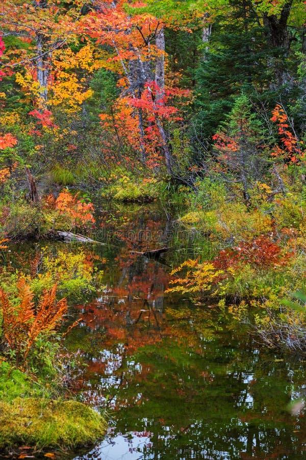 Colores hermosos de la caída reflejados en una corriente fotos de archivo
