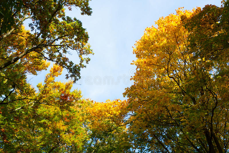 Colores hermosos del otoño en los árboles fotografía de archivo libre de regalías