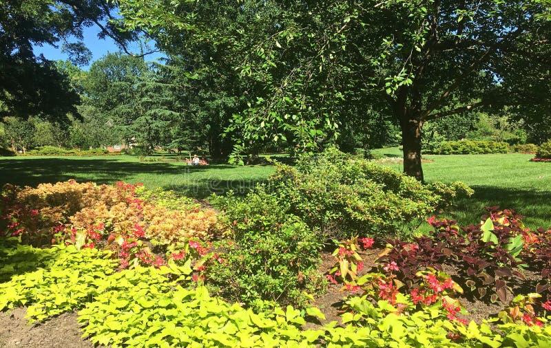 Colores intrépidos en un jardín en un parque de Maryland fotografía de archivo