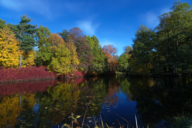Colores preciosos del otoño fotografía de archivo