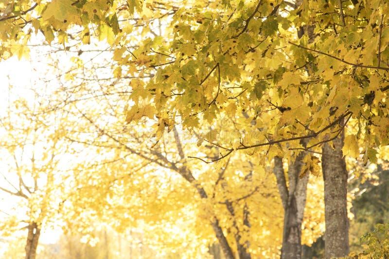 Colores rojos y coloridos del otoño en el bosque con un camino y un sol imagen de archivo libre de regalías