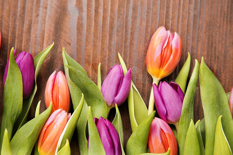 Colores spring tilip royalty free stock images