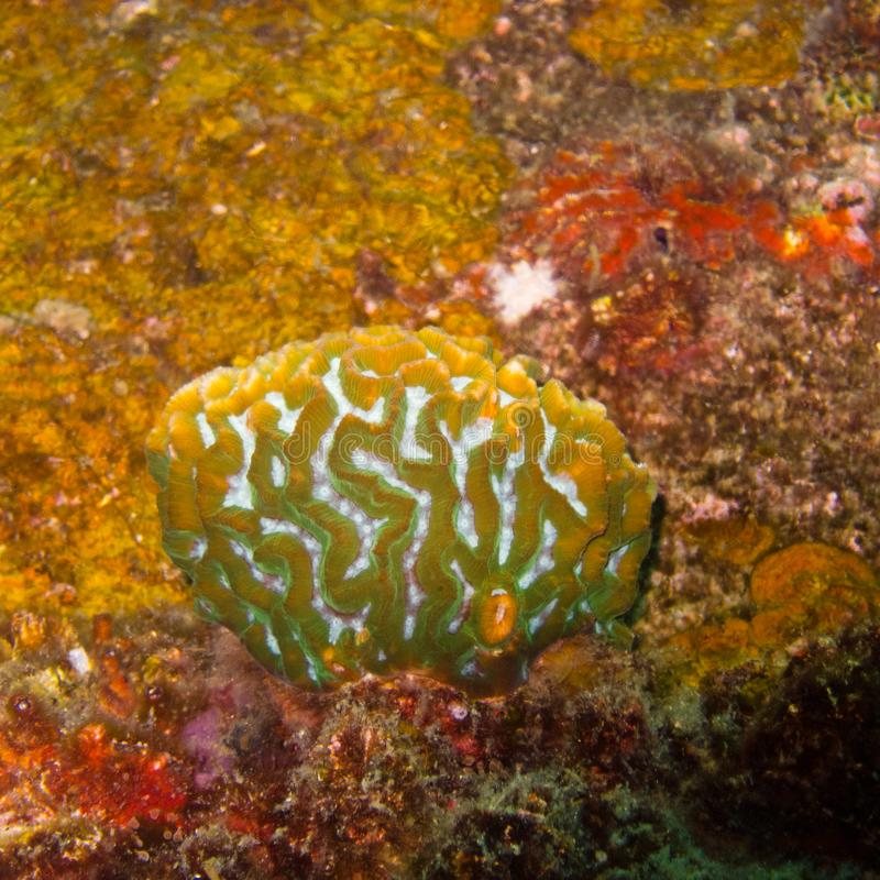 Colores subacuáticos, anaranjados coralinos en Tailandia fotografía de archivo