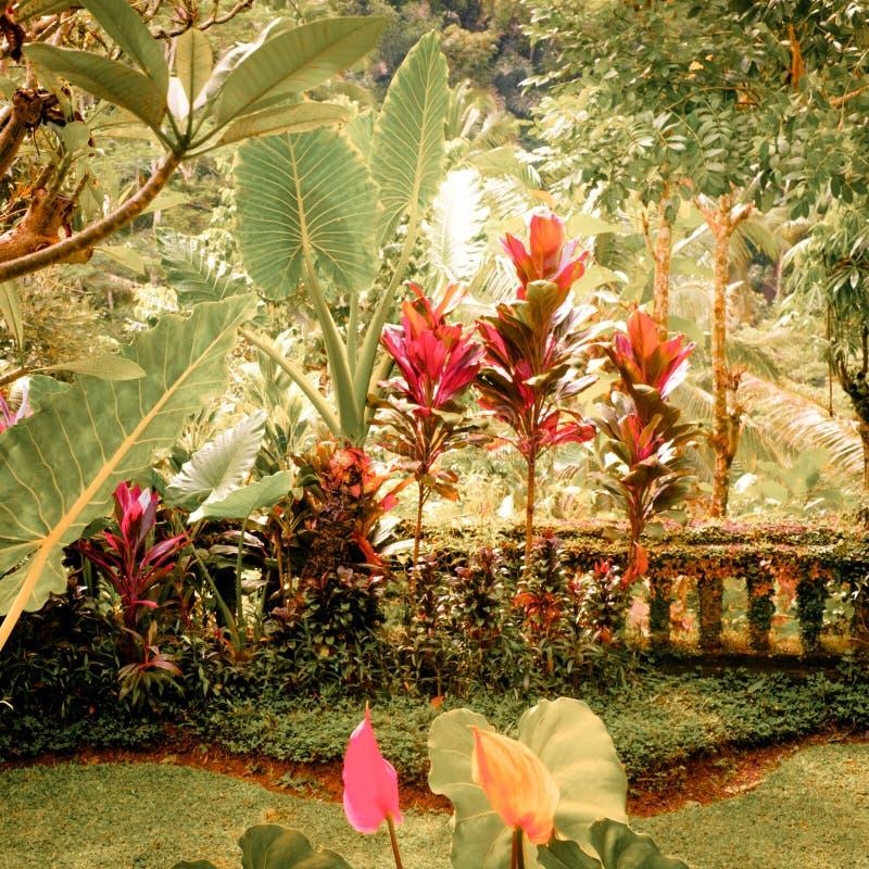 Colores surrealistas del jardín tropical de la fantasía foto de archivo