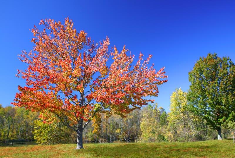 Colores vivos del otoño fotografía de archivo libre de regalías