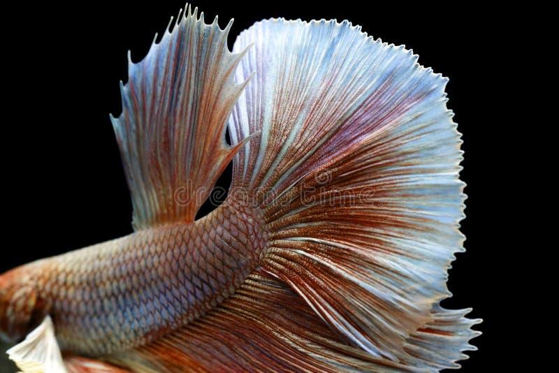 Colores y modelos en la mordedura de la superficie de la cola de los pescados imagen de archivo libre de regalías