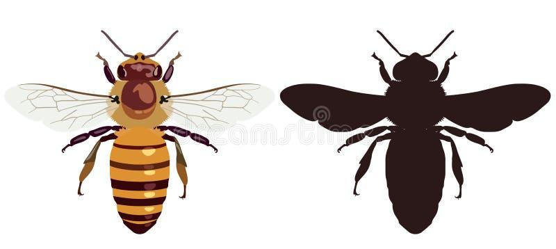 Colorez l'image de l'abeille et de sa silhouette foncée Illustration de vecteur images stock