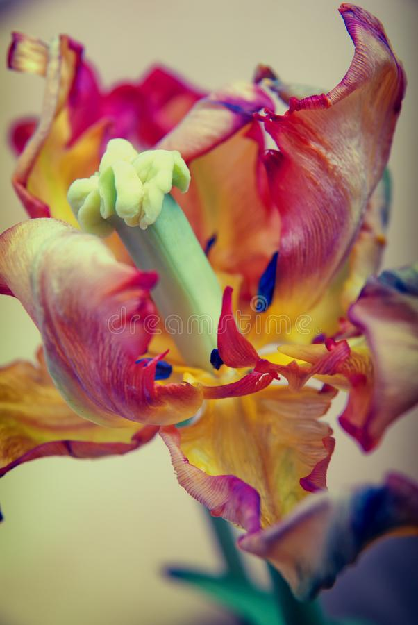 Free Colorful Abstract Macro Shot Of Flower Stock Images - 111081654