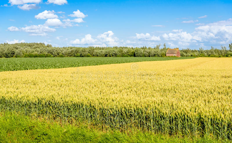 Colorful agricultural landscape in the Netherlands stock photography