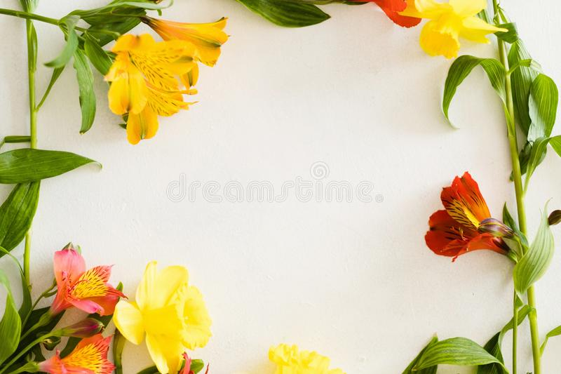Alstroemeria frame white background spring flower stock photo