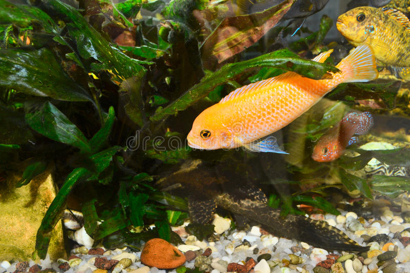 Colorful Aquarium With Fish Royalty Free Stock Photo