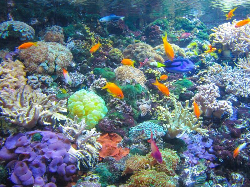 Colorful aquarium, fish and other sea creatures stock photo