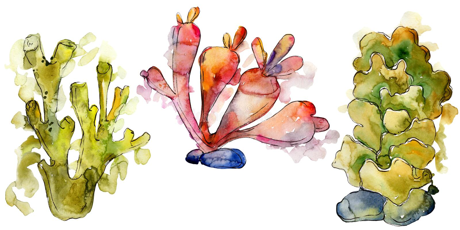 Colorful aquatic underwater nature coral reef. Watercolor background set. Isolated corals illustration element. Colorful aquatic underwater nature coral reef stock images