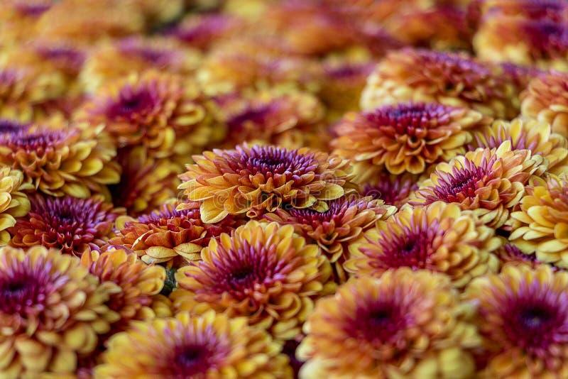 Colorful Arrange of Flowers stock photo