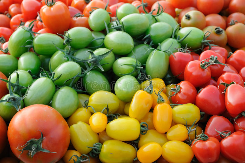 Colorful assorted tomatoes stock images