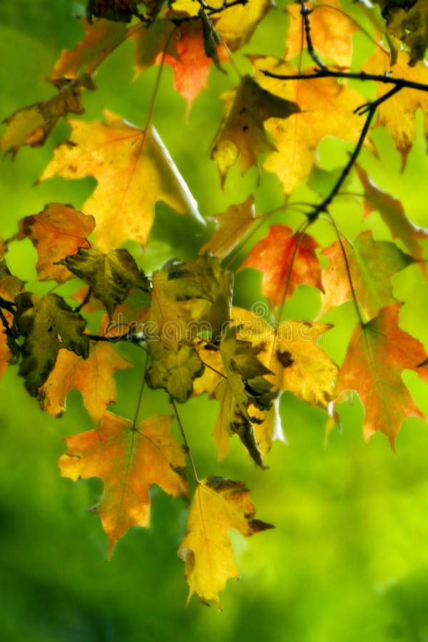 Free Colorful Autumn Stock Photo - 1785690
