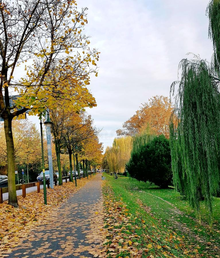 Download Colorful Autumn stock image. Image of treviso, italy - 105344789