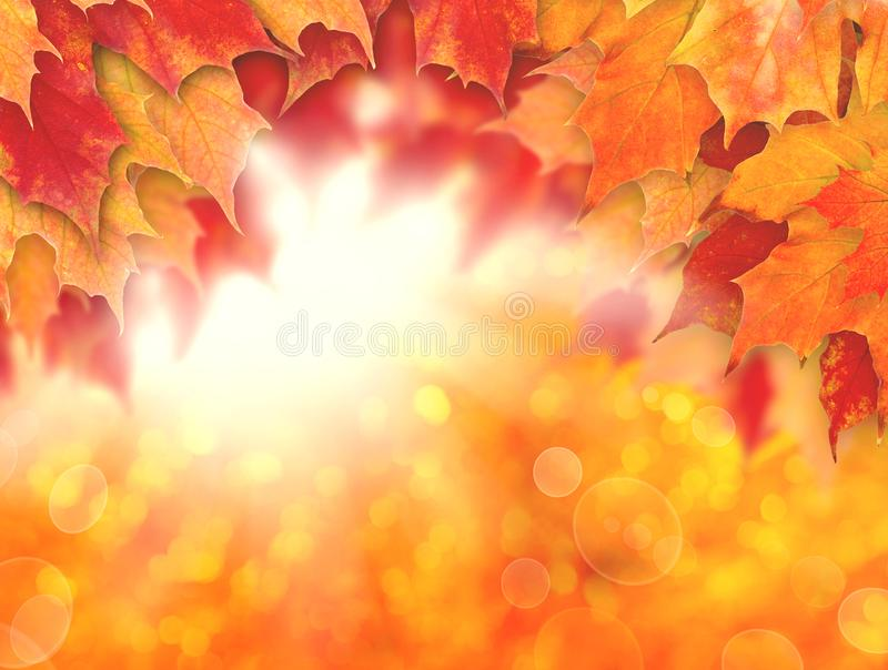 Colorful autumn background. Fall leaves and abstract sun light.  stock illustration