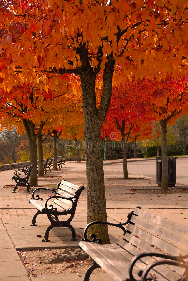 Free Colorful Autumn Canopy Royalty Free Stock Image - 1523806