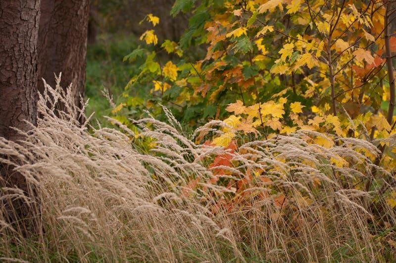 Colorful autumn contrast. Beautifull autumn colors in nature stock photos