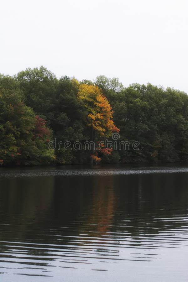 Colorful autumn/fall foliage in a forest on a lake in new england. Colors of red orange and green stock photo
