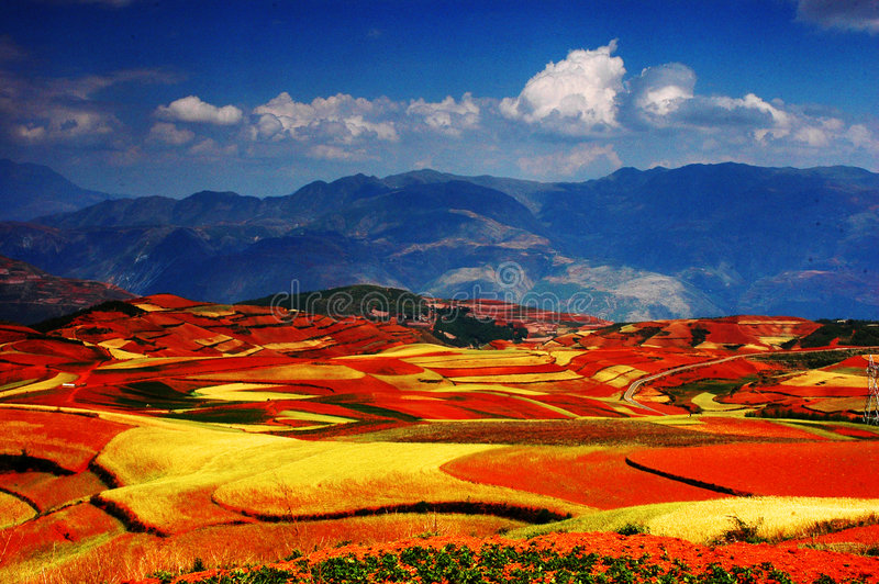 The colorful autumn filed stock photos