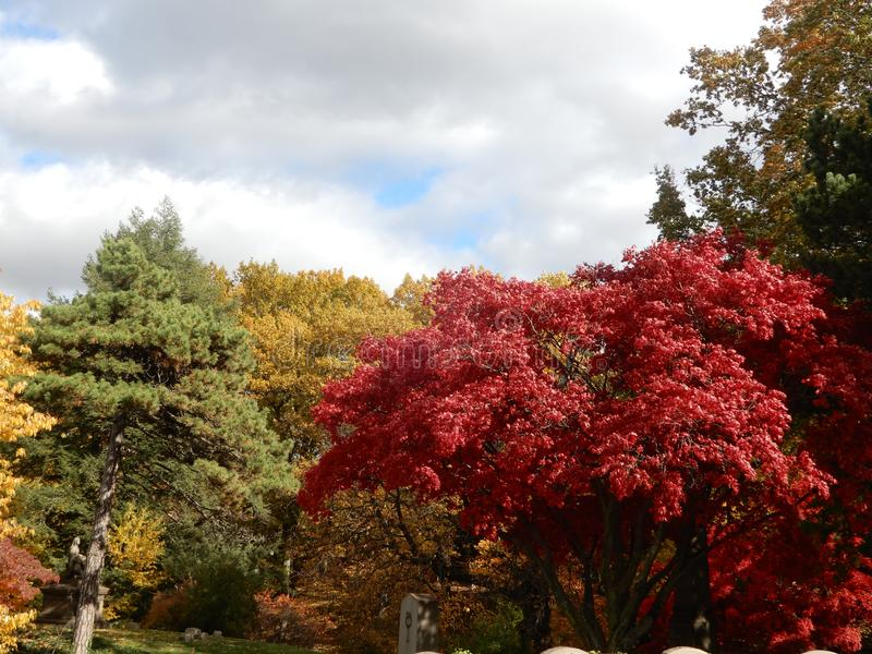 Colorful Autumn foliage against cloudy blue sky stock photography