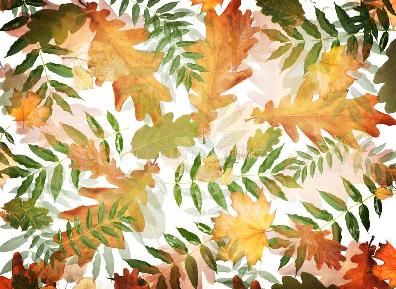Colorful autumn foliage in chaotic order on an abstract background stock illustration
