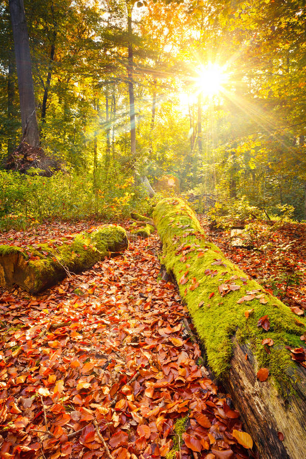 Colorful autumn in the forest stock photos