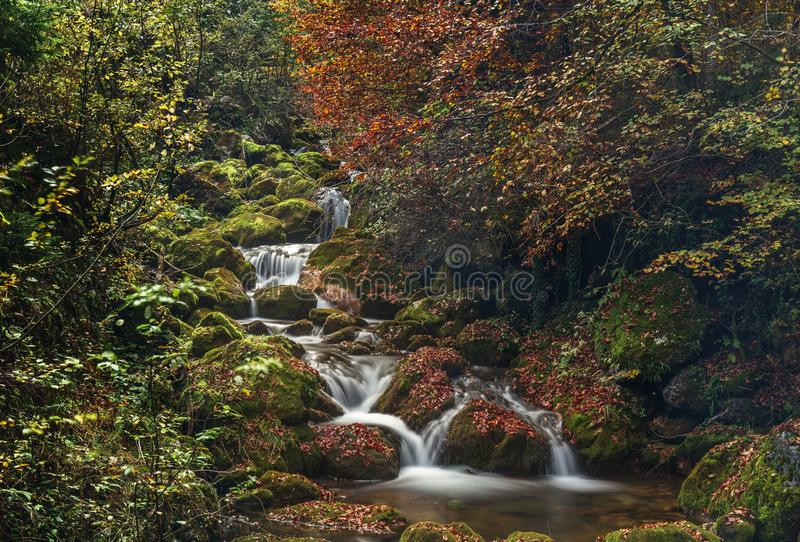 Colorful autumn in forest. Closeup on water stream and rocks stock images