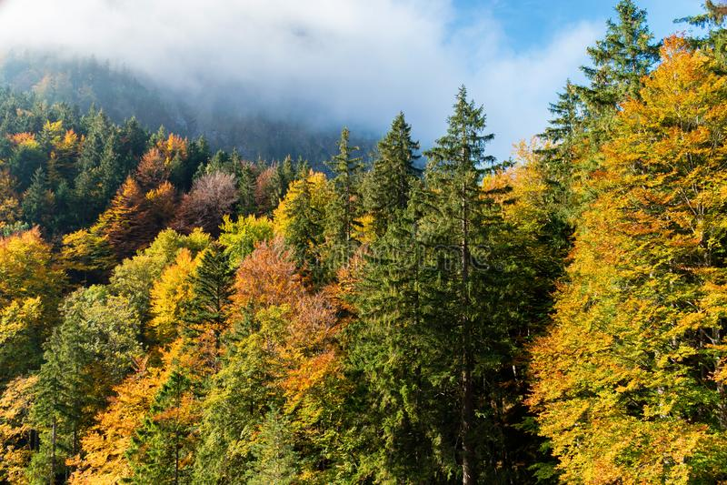 Colorful autumn forest in the mountains in the morning sun in the clouds stock photos